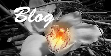 Suivez nous sur notre Blog